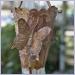 Butterfly Cups Rain Chain Rainchains Rainchain Rain Chains